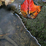 Bright Red Leaf Near A Stream Poster by Chris Hill