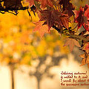 Brilliant Autumn Color Poster