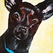 Brindle Chihuahua Ears Poster