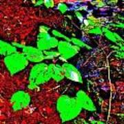 Brook Texture 15 Poster