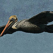 Brown Pelican Painterly Poster