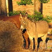 Brown Sugar Eating Some Hay Poster