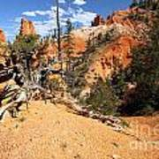 Bryce Canyon Forest Poster