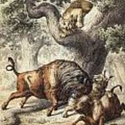 Buffalo & Lynx Poster
