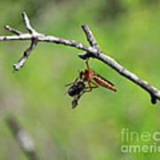 Bug Eat Bug Poster
