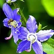 Bug On Blue Poster