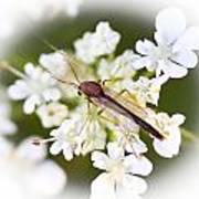 Bug On White Poster by Maureen  McDonald