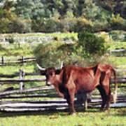 Bull In Pasture Poster by Susan Savad