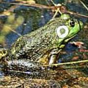 Bullfrog 1 Poster