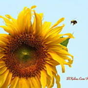 Bumble Bees Love Sunflowers Poster