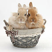 Bunnies A Basket Poster