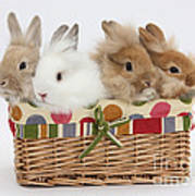 Bunnies In A Basket Poster