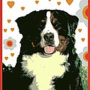 Burmese Mountain Dog Poster