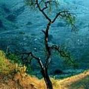 Burned Oak Tree Calabasas Poster
