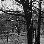 Burned Trees Poster