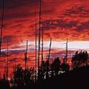 Burnt Trees Against A Sunset Poster