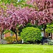 Bursting Blossoms Poster
