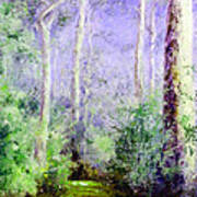 Bush Trail At The Afternoon Poster