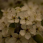 Bushel Of Flowers Poster
