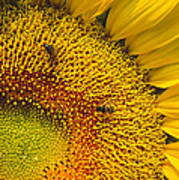 Busy Sunflower Poster