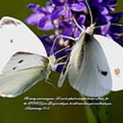 Butterfly - Dueteronomy 31 6 Poster