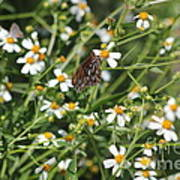 Butterfly 35 Poster