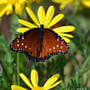Butterfly And Yellow Flowers Poster