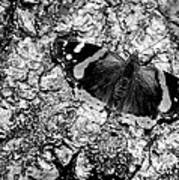 Butterfly Bark Black And White Poster
