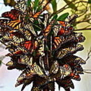 Butterfly Bouquet Poster