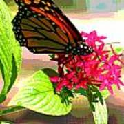 Butterfly Flowers Poster
