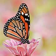 Butterfly Garden IIi Poster