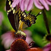 Butterfly Heaven Poster
