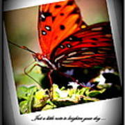 Butterfly Note Card Poster