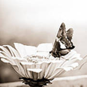 Butterfly On Flower Bw Poster