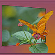Butterfly Orange 16 By 20 Poster