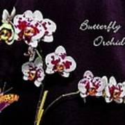 Butterfly Orchid Poster