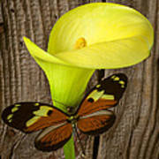 Butterfly With Calla Lily Poster