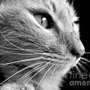 Bw Kitty Poster