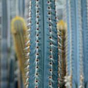Cactus 14 Poster