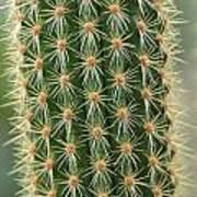Cactus 19 Poster