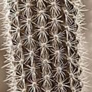 Cactus 19 Sepia Poster