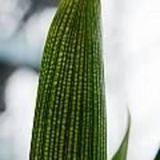 Cactus 28 Poster