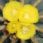 Cactus 37 Poster