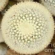 Cactus 44 Poster