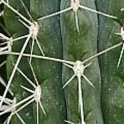 Cactus 61 Poster