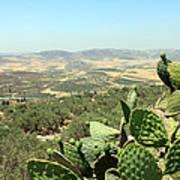Cactus At Samaria Poster