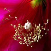 Cactus Flower Interior Poster