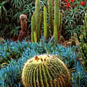 Cactus Gardens Poster