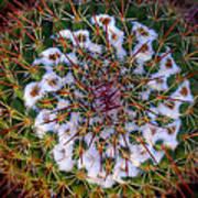 Cactus Radiance Poster