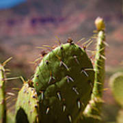 Cactus With A View Poster
